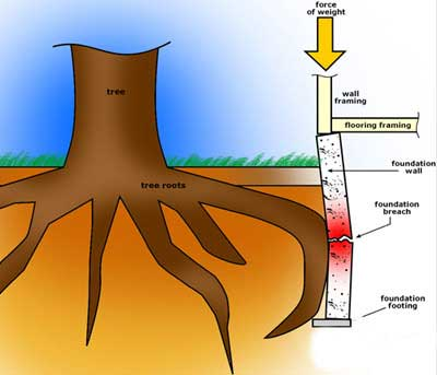 tree roots Good landscaping practices and how can it save money on heating and cooling cost?